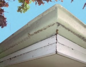 Early signs of rusty gutters