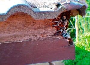 Timber_Superficial-damage